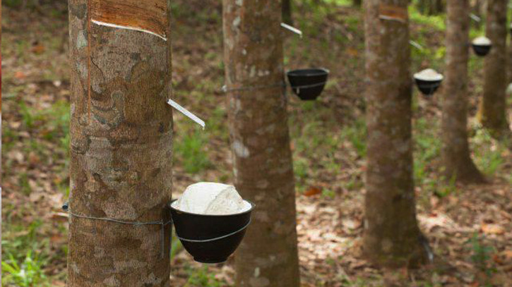 Cambodia exports 3.5 million tons of rubber