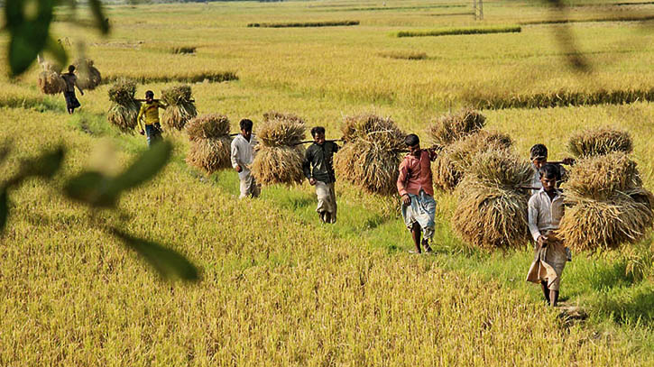 Statistics of rice production is not actual as field