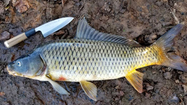 Innovation of new technology for carp farming