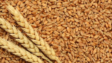 Russian wheat market hiked before the increase in tariffs