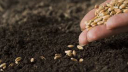 Farmers` seed decisions empowering by new digital platform