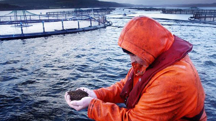 Pandemic boosts interest in aquaculture innovation in Scotland